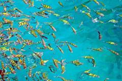 Catamaran boat charter to Coral and Racha Islands